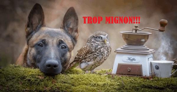 amitié entre un chien et un hibou
