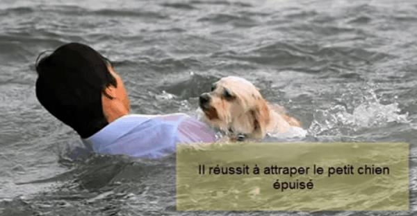 sauvetage d'un chien d'une noyade