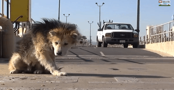 chien-sauvetage-vieux-abandon
