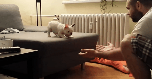 chien qui saute dans les bras de son maître