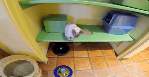 maison adaptée pour chat vidéo