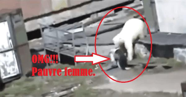 femme attaquée par un ours polaire