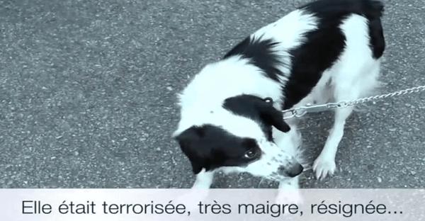 sauvetage d'une chienne et ses chiots