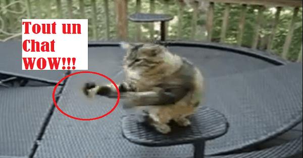 chat qui exécute un tour
