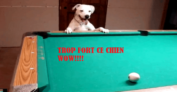 Cien qui joue au billard