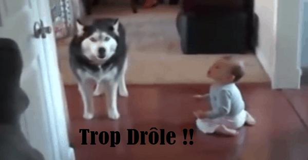 chien qui discute avec un bébé