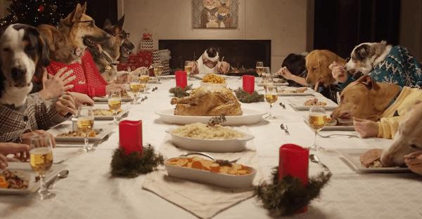 festins de roi pour chien et chat