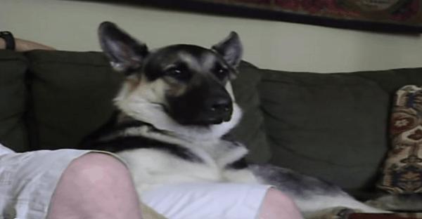 chien qui s'endore