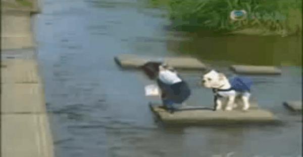 un chien et un singe qui saute