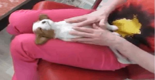chiot qui a un massage