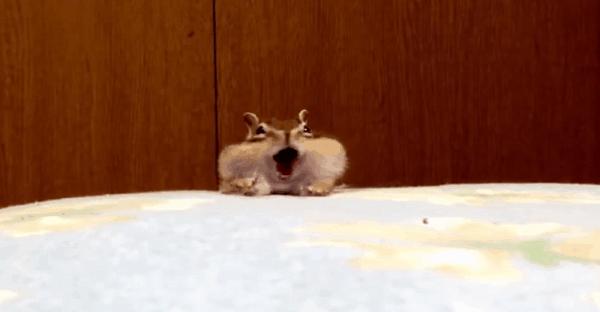 écureuil qui se la coule douce