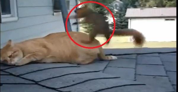 Est-ce que cet écureuil attaque le chat? Voyez la conclusion LOL!