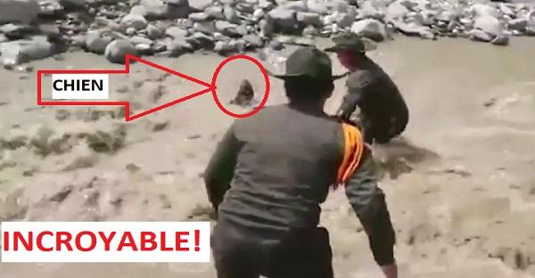 Un chien se noie, des policiers tentent de le sauver. DES IMAGES INCROYABLES À VOIR ABSOLUMENT!