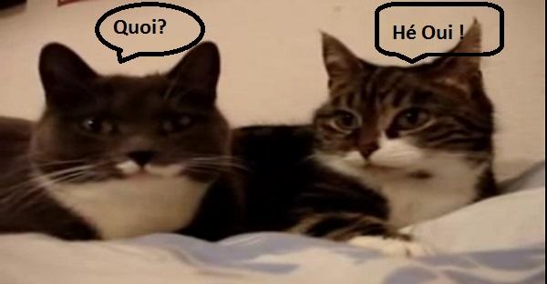 Une conversation animée entre chats. TROP DRÔLE À VOIR LOL!
