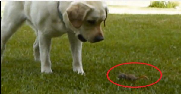La rencontre - Adorable : un bébé écureuil adopté par des chiens ...