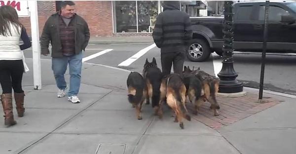 Voyez ce que cet homme fait avec ces 5 chiens. ÉNORME À VOIR ABSOLUMENT!