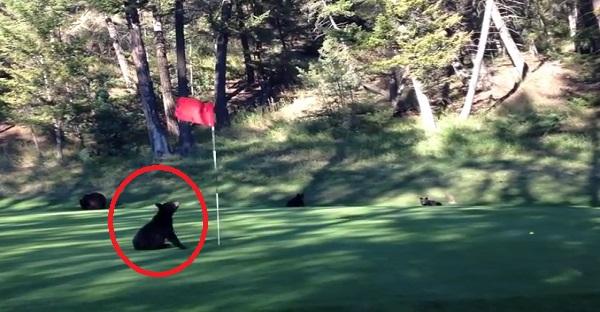 """Un""""Foursome"""" de golfeur bien spécial a été filmé. Celui qui tient le drapeau est trop DRÔLE LOL!"""