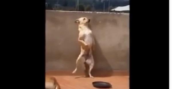 chien danse salsa