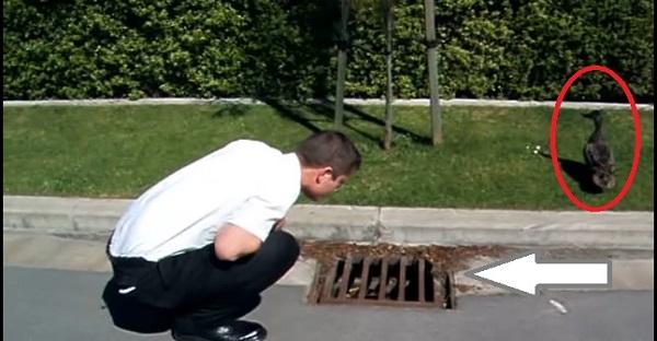 Un homme entend quelque chose dans les égouts. La suite est tout simplement ADORABLE, À VOIR!