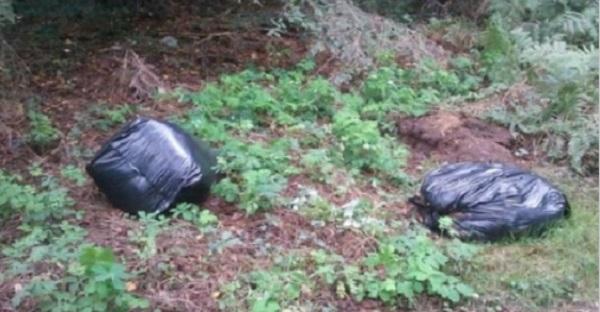 Elles trouvent 2 sacs à ordures près d'une rive. Ce qu'il y a à l'intérieur est INIMAGINABLE.