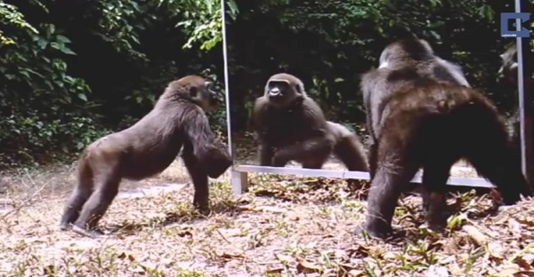 Des hommes installent un grand miroir dans la jungle. Son effet est DRÔLE ET REMARQUABLE À VOIR!