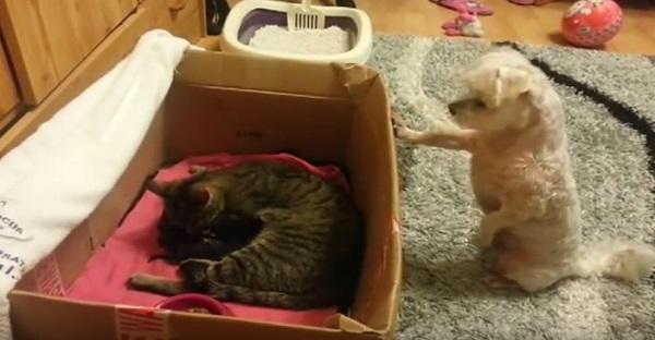 La réaction de ce chien face aux chatons est ADORABLE!