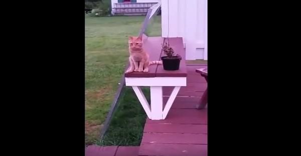 Quand vous allez voir ce que ce chat fait...............