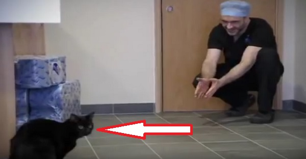 Ce chat n'est pas comme les autres, voyez pourquoi. ADMIRABLE!