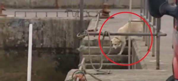Chaque journée ce chien vient retrouver son ami au port. UN AMI INUSITÉ!