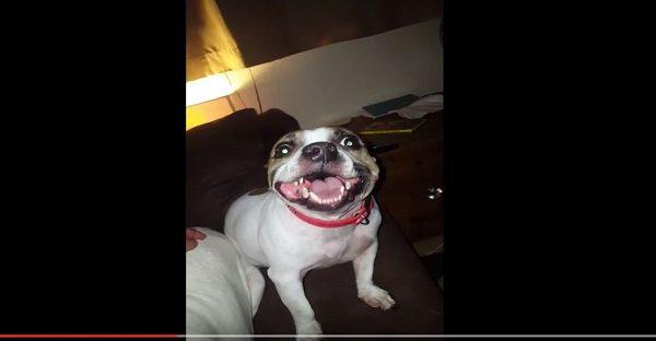 chien-qui-eternue-lol-trop-drole