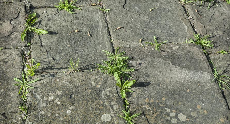 7 trucs naturels pour liminer vos mauvaises herbes for Detruire les mauvaises herbes