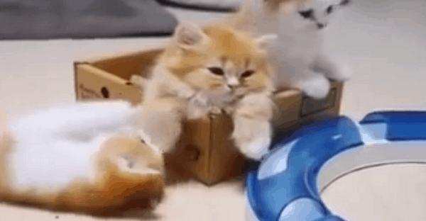 vidéo chaton mère tendresse mignon