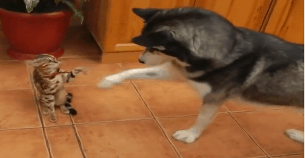 chien rencontre chat video drole