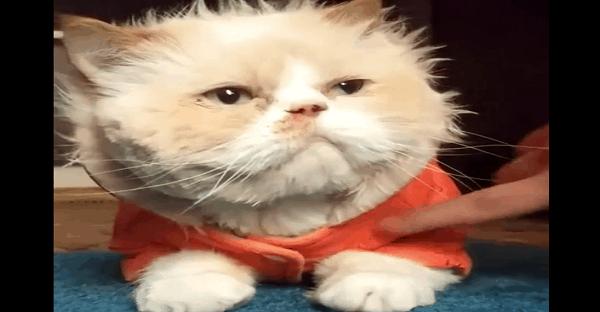 chat qui danse comme michael jackson vidéo
