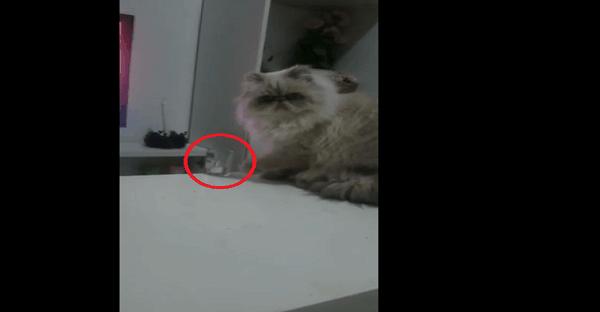 vidéo chat drôle ordinateur