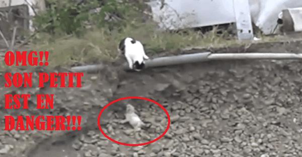 chaton en danger sauvé par sa mère