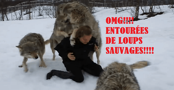 vidéo d'une femme avec des loups sauvages.