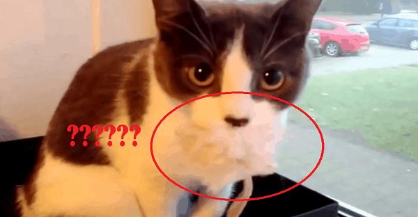 C,est quoi ce jouet dans la bouche du chat?