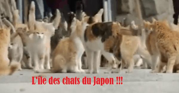 ile des chats au Japon
