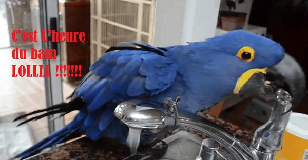 C'est l'heure du bain pour ce perroquet