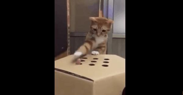 chat qui joue à la taupe