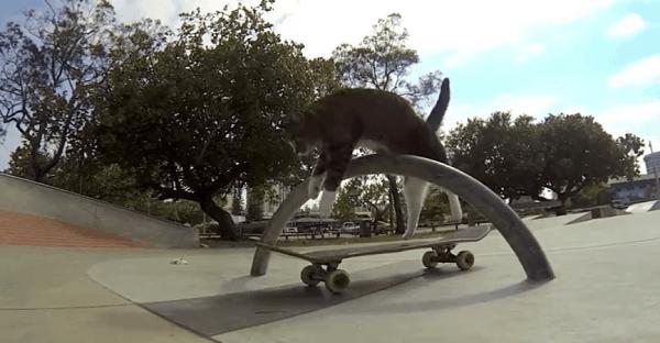 chat champion de skate