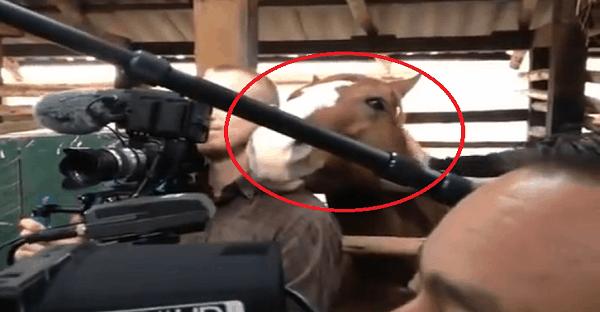 un cheval très coquin
