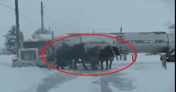 des chevaux qui tirent un camion