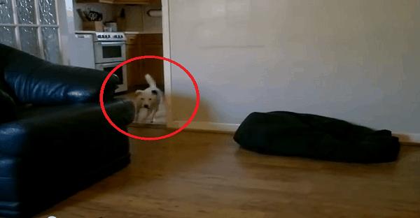 chien qui tombe en courant