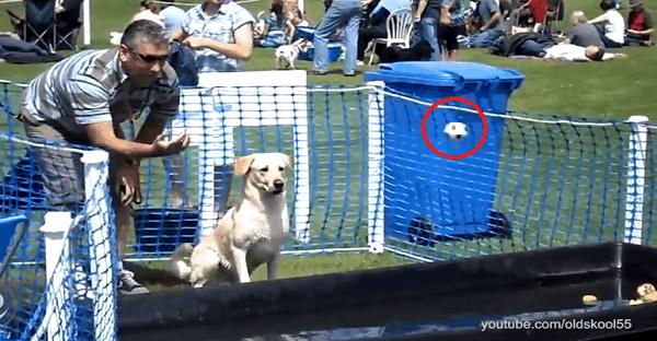 des chiens qui font des chutes