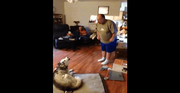 Un homme qui gronde son chien
