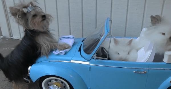 chienne qui lave les autos