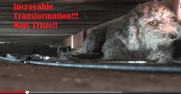 Sauvetage de chiens d'un dépotoir