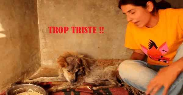 sauvetage triste d'un chien